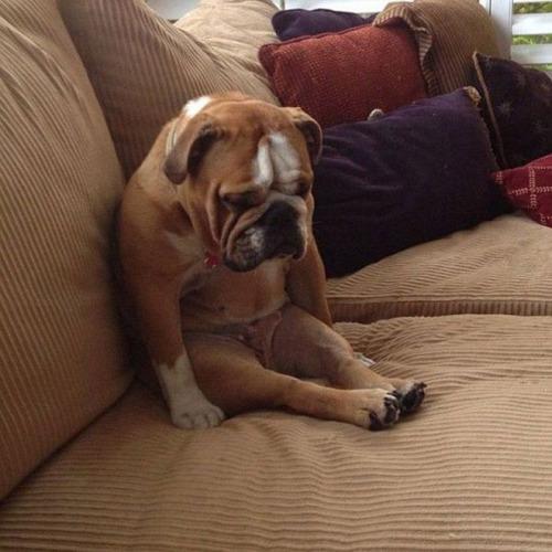 dog sitting III
