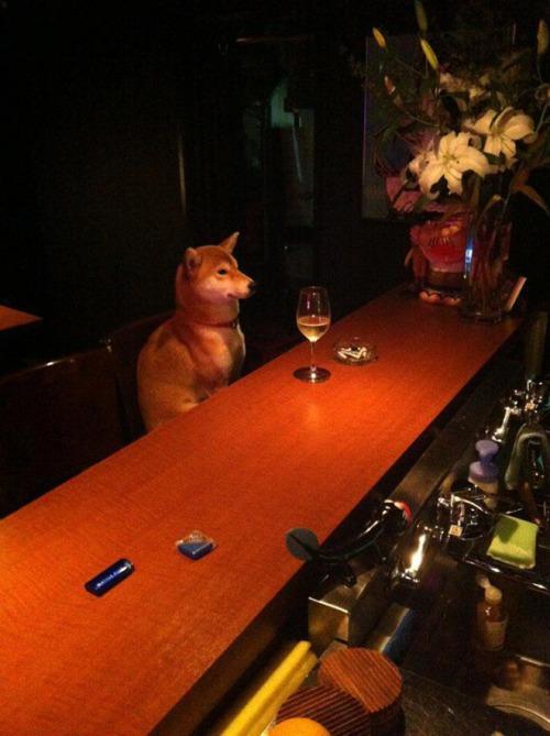 dog sitting IIII - at bar solo