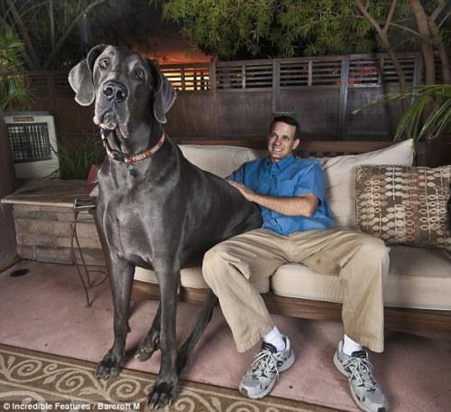 Giant George I